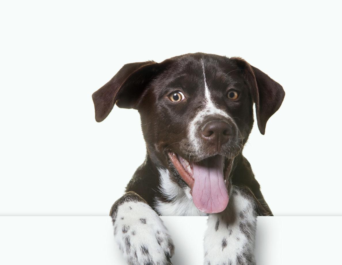 σκυλοτροφές