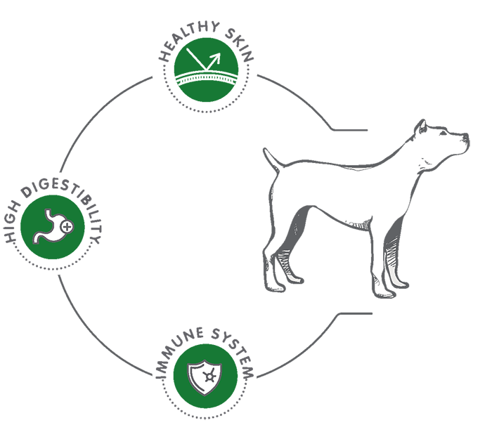 vio-terpsis-diagram-sm